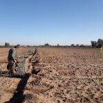 """Plantaciones de Life Resilience en la finca """"El Valenciano"""""""