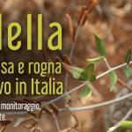 Xylella fastidiosa y la sarna del olivo en Italia