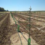 A estratégia de irrigação como técnica sustentável