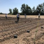 Nuevo hito en Life Resilience: segunda plantación en El Valenciano