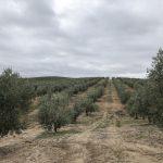 Life Resilience visita Al Alma del Olivo, finca piloto del proyecto LIFE Food & Biodiversity