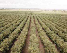 Greenfield Technologies y la agricultura de precisión