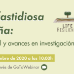 """Online conference """"Xylella fastidiosa in Spain: Current situation and advances in research"""""""