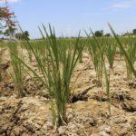 Usos agrícolas del suelo que ayudan a mitigar el cambio climático