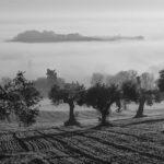Curso sobre olivicultura y cambio climático