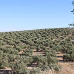 Técnica 3D para conocer la salud de los olivos