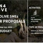 GEN4OLIVE financiará actividades de mejora genética del olivo